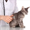 Ветеринарные клиники в Кантемировке
